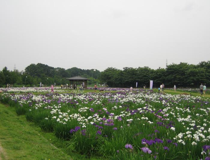 p9-別府沼公園